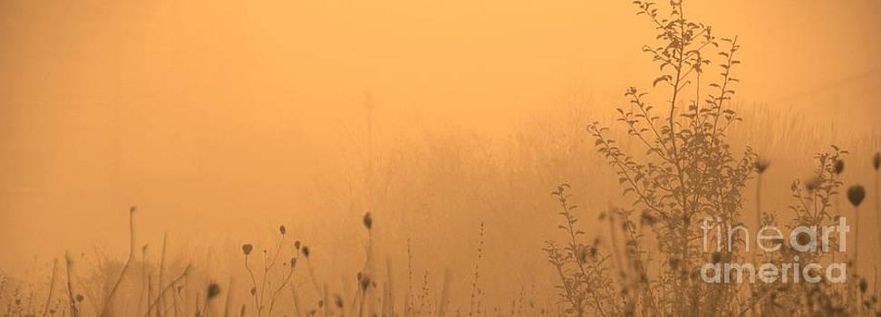 Foggy Fire by Paula Sharlea