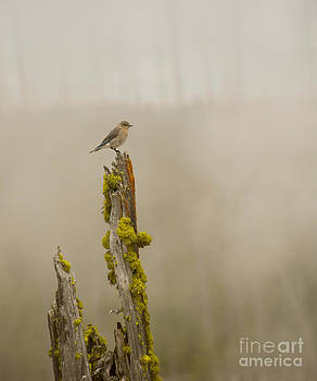 Foggy Friend by Birches Photography