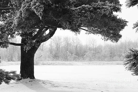Sophie Vigneault - Foggy Icestorm