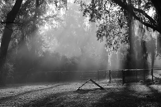 Patti Colston - Foggy Morn at Dog Park