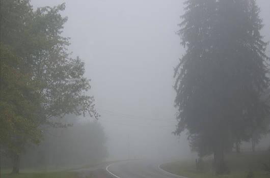 Foggy  Morn by Sarah McKoy