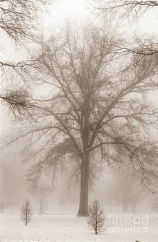 Christine Stack - Foggy Morning