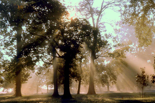 Foggy Morning by Denny Ragan