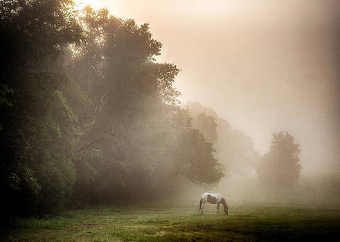 Foggy Morning Horse by David Morel