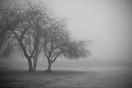 Foggy Morning by Kathy Chadwick