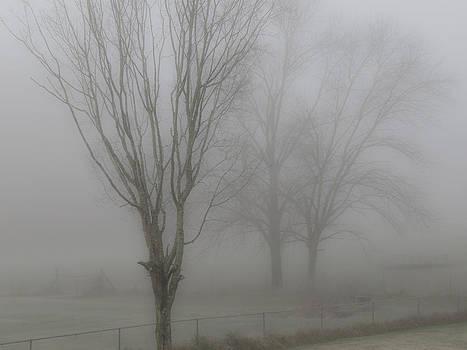 Foggy Morning by Linda A Waterhouse