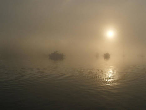 Foggy Morning by Mark Alan Perry