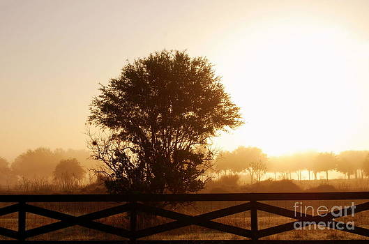 Foggy Morning Sunrise in Florida by Linda Rae Cuthbertson