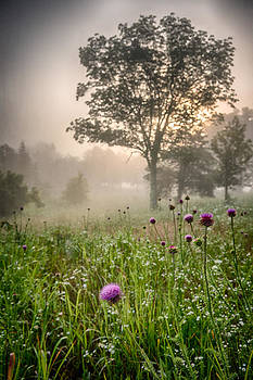 Foggy Morning Thistle I by David Morel