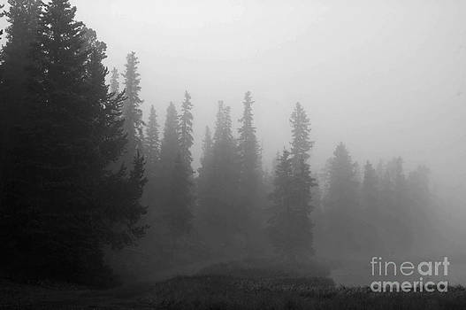 Foggy Mt Evans by Barbara Schultheis