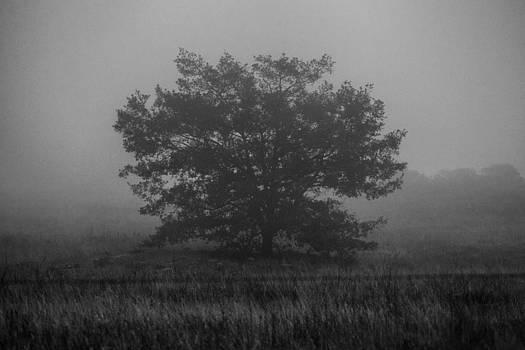 Foggy Oak by Robert  Aycock