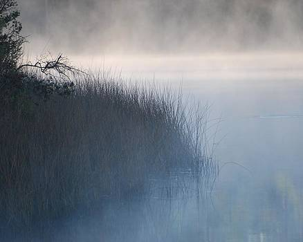 Foggy Peace by Robbie L Rogers