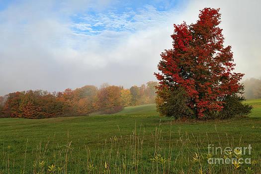 Charles Kozierok - Foggy Ridge