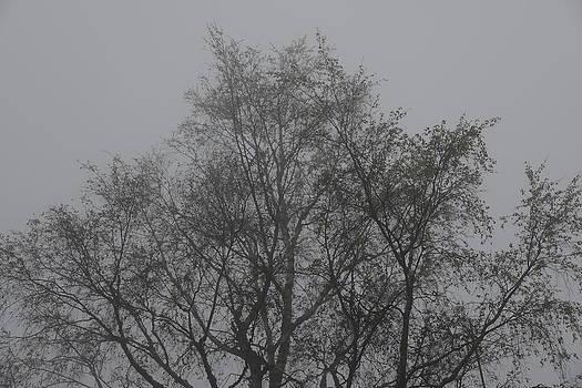 Foggy Romance 4 by Teo SITCHET-KANDA