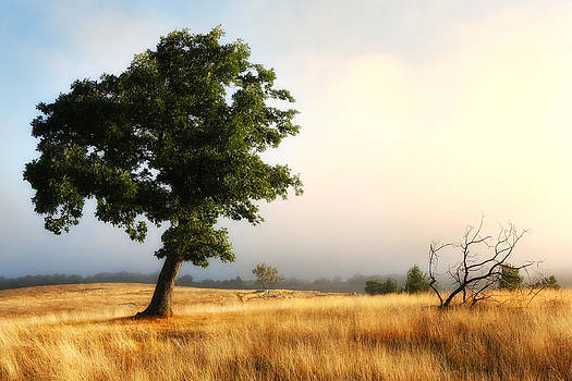 Foggy Summer Morning on Blue Ridge Parkway I by Dan Carmichael