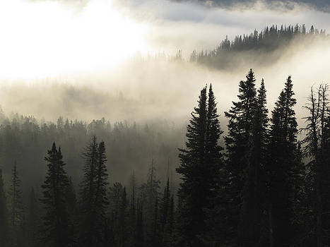 Foggy sunrise at Yellowstone by Jill Bell