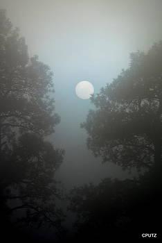 Foggy Sunrise by Carrie Putz