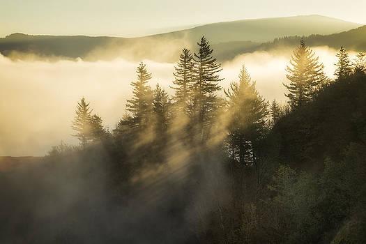 Foggy Sunrise by Jon Ares