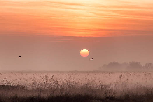 Foggy Sunrise Merced County CA by Troy Montemayor
