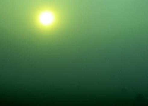 TONY GRIDER - Foggy Sunrise on Round Bales