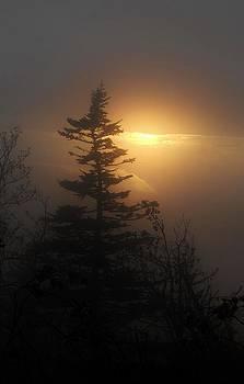 Foggy Sunset by Jeff Moose
