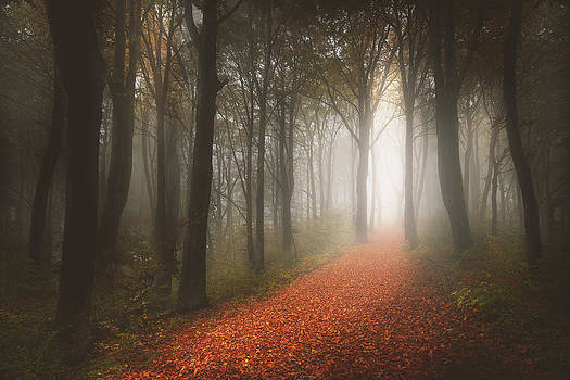 Foggy trail in the forest by Toma Bonciu