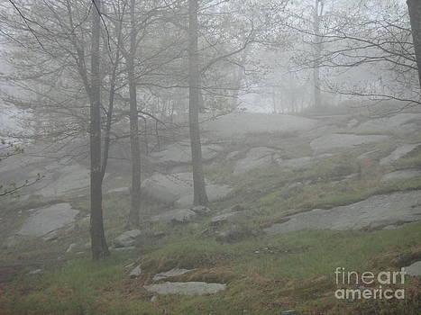 Foggy Trail Morning by Ara Wilnas