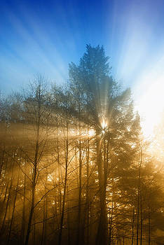 Foggy Trees by Colin Sands