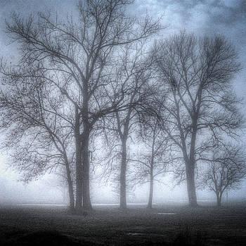 Foggy Woods by Jay Swisher