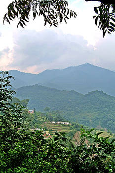 Devinder Sangha - Fogy Hills