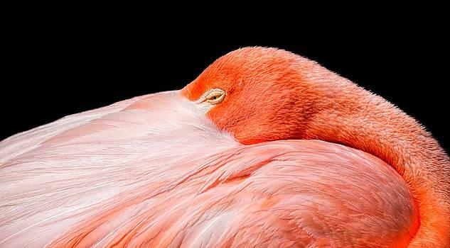 Folded Flamingo by Eric  Bjerke Sr