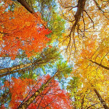 Foliage Aflame by Katya Horner