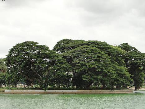 Foliage by Meghna Suvarna