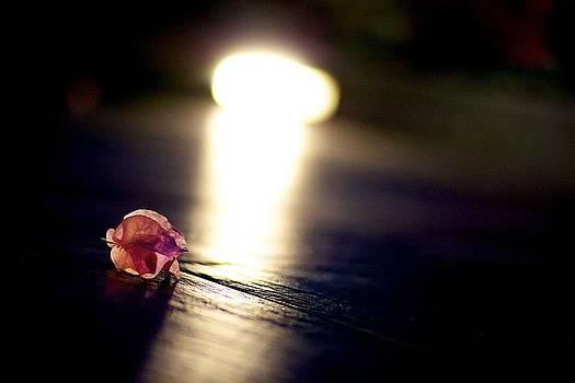 Follow the light by JM Photography