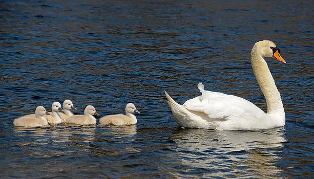 Following Mom by Liz Mackney