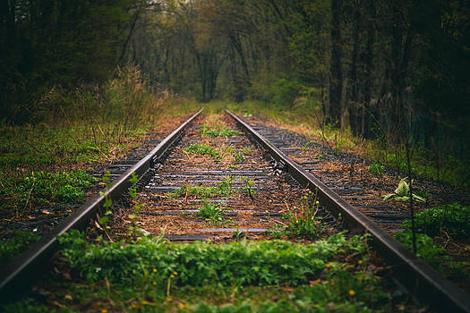 Following The Tracks by Karol Livote