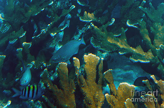 Agus Aldalur - Fondo marino