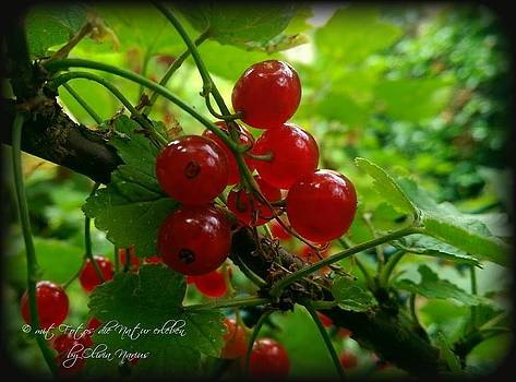 Food Berry by Olivia Narius
