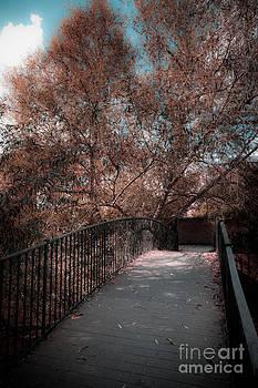 Footbridge in soft autumn by Peter Noyce