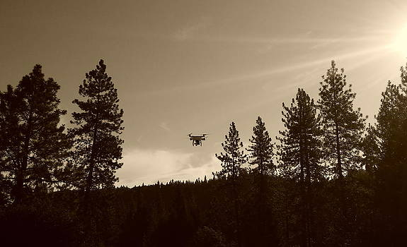 Foothills Flight by Sue McElligott