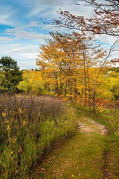 Footpath in the Meadow by Kerri Garrison