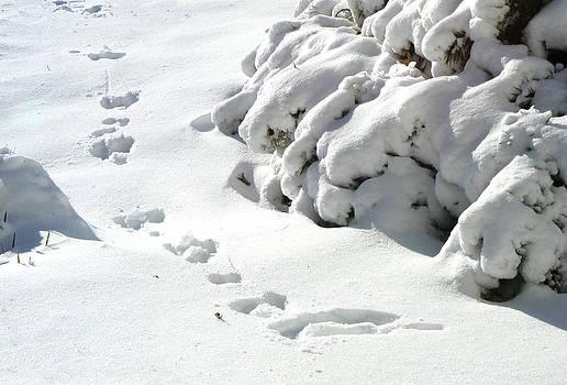 footprints in the Snow by Rachel Christine Nowicki