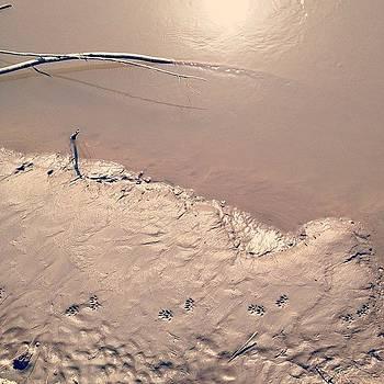 Footprints by Rebecca Guss