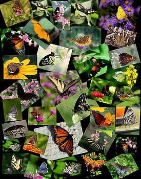 Rosanne Jordan - For the Love of Butterflies