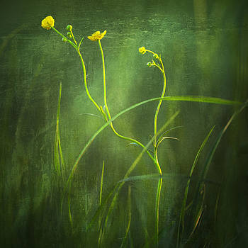 For you my love - wild flowers by Toma Bonciu