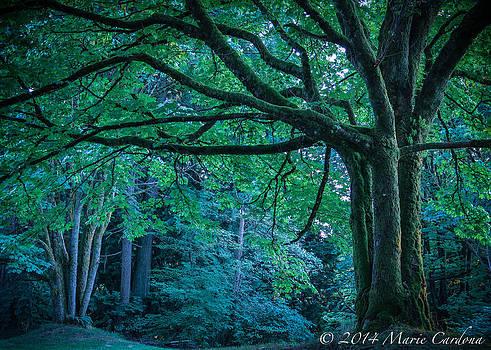 Forest at Dusk by Marie  Cardona