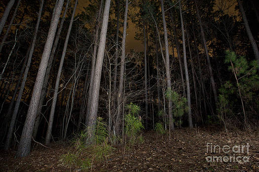 Jonathan Welch - Forest at Night
