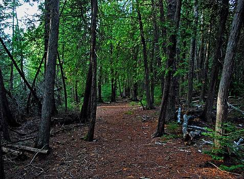 Forest at Presque Isle by Gary Wonning