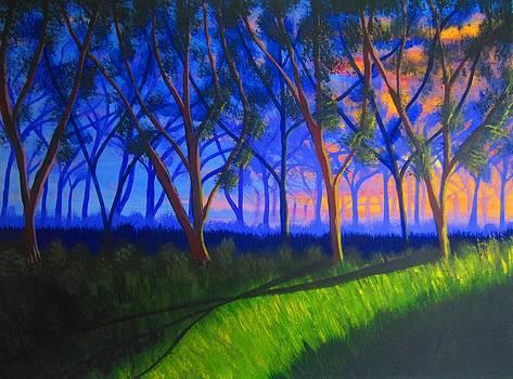Forest at Sunset by Haleema Nuredeen