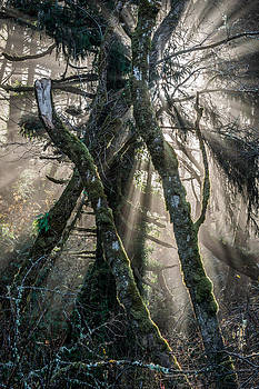 Forest Beams by Mike  Walker